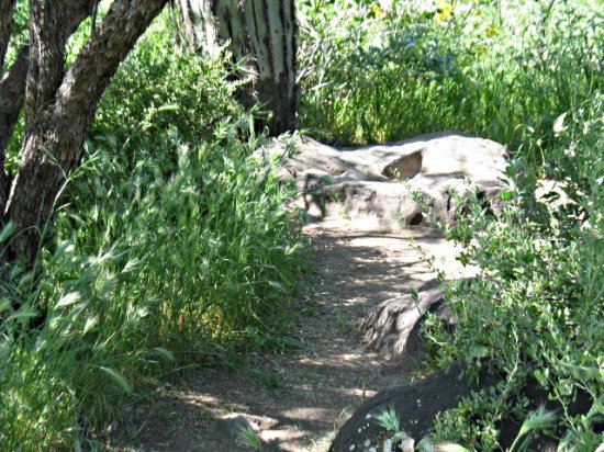 Cave Creek, AZ: this is a stone metate. It is a grinding stone where Native Americans ground raw grain into flou