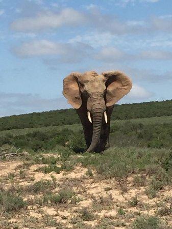 Национальный парк слонов Аддо, Южная Африка: IMG-20170311-WA0014_large.jpg