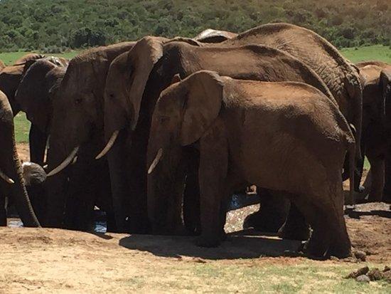 Национальный парк слонов Аддо, Южная Африка: IMG-20170311-WA0013_large.jpg