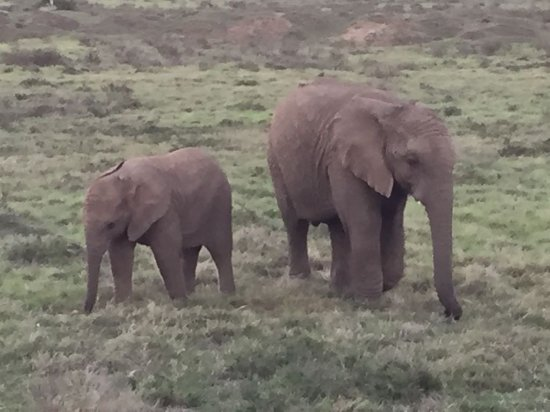Addo Elephant National Park, South Africa: IMG-20170311-WA0010_large.jpg