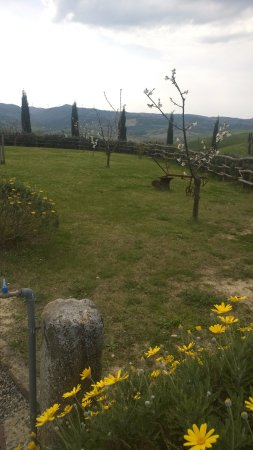 Terricciola, Italia: giardino