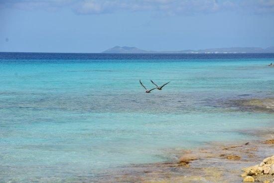 Kralendijk, Bonaire: Amazing place