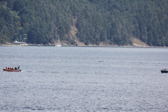 Sidney, Canada: Whales on the crossing to Victoria Island