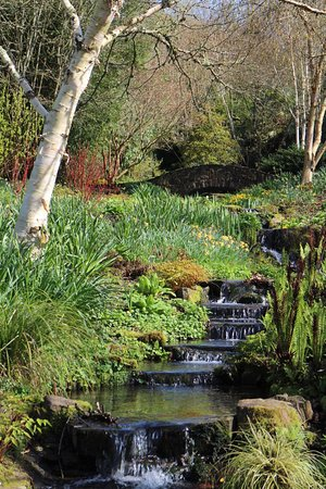 Great Torrington, UK: Rosemoor Gardens - stream to the lake