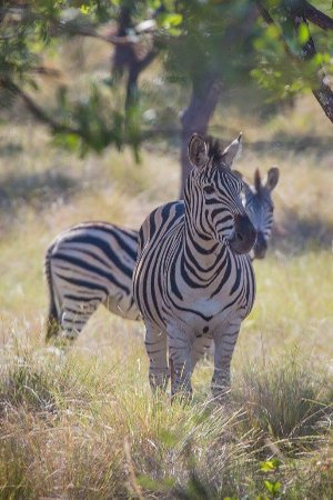 Foto de Provincia de Limpopo