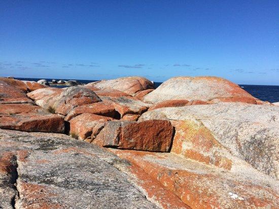 Bicheno, Australia: Pretty rock ledge to explore