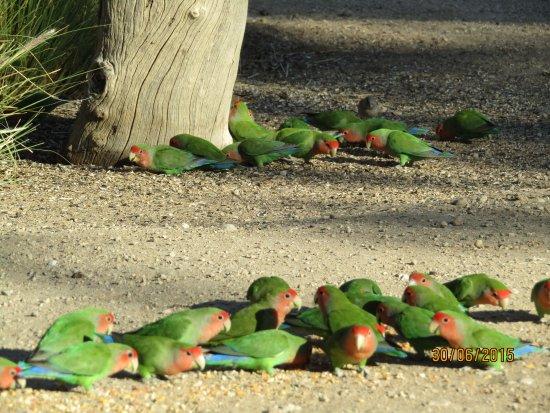 Omaruru, Namibia: Early morning Birdwatching