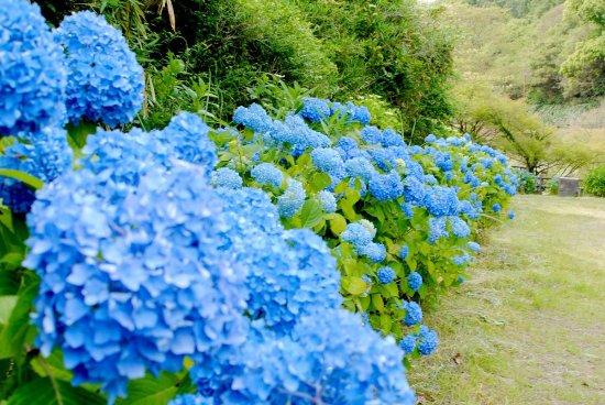 Wakayama City Forest Park