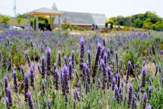 Nishinosho Fureai no Sato Herb Garden