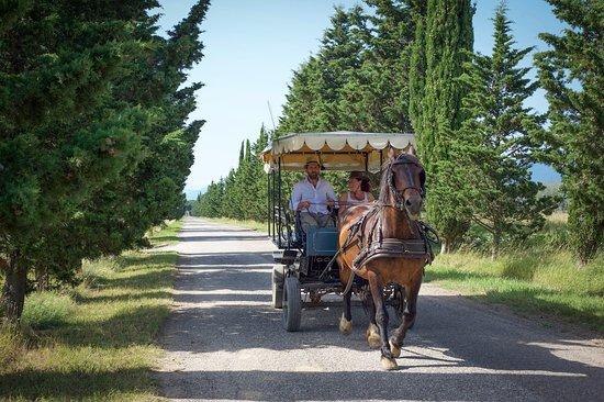 Crespina, Italy: Tour in carrozza