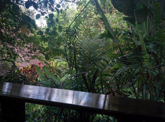 Khao Sok Las Orquideas Resort照片
