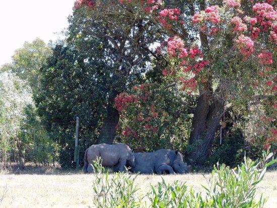 Port Elizabeth, Sudáfrica: Kragga Kamma Game Reserve