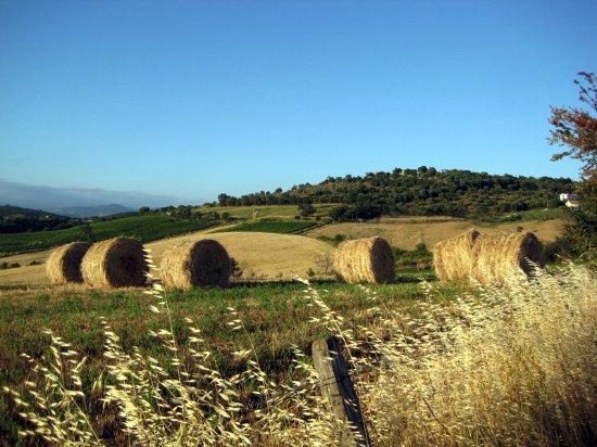 Quercia Rossa Farmhouse: Landscape