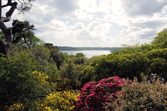 Torpoint, UK: Views to die for over the tree tops and down the river