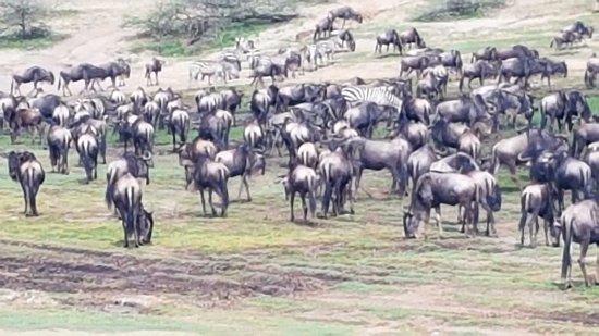Arusha Region, Tanzania: Great Migration
