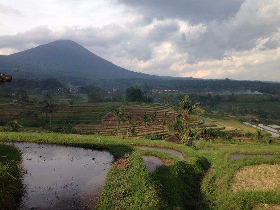 Jatiluwih Green Land: Jatiluwih Rice Terraces