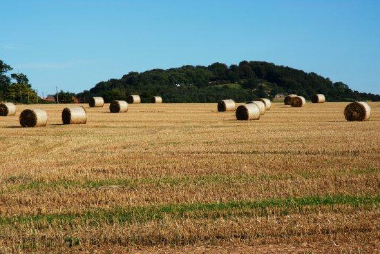 Grafton, UK: Herefordshire's Farmland