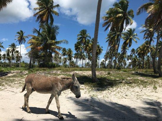 Байяибе, Доминикана: Ciuchino in spiaggia