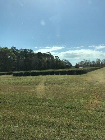 Charleston Tea Plantation : photo1.jpg