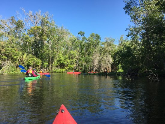 Adventures in Florida : A picture from our Wekiva River kayak trip.