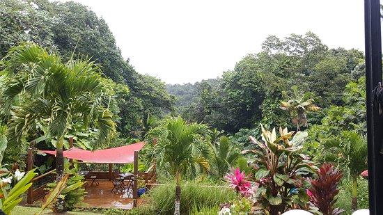 Petit-Bourg, Guadeloupe: Au coeur de la foret