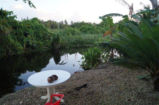 Casa Mango: Lagune