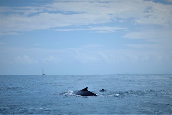 Cabarete, Dominican Republic: Whale Watching Samana