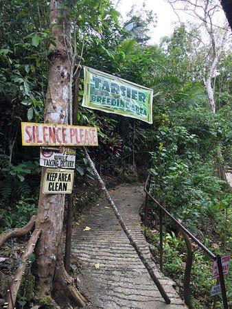 Loboc, Philippines: photo1.jpg