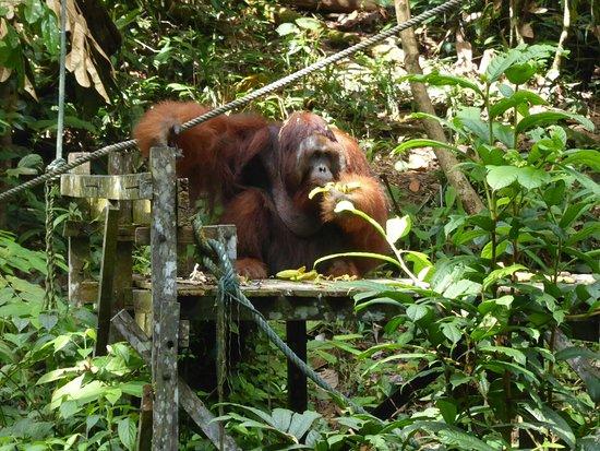 Semenggoh Nature Reserve Photo