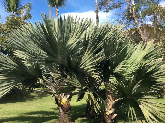 Grand Bahia Principe El Portillo: Quelques Photos de notre séjour!