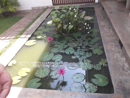 Taru Villas - Lake Lodge : Un des bassins aux lotus dans le jardin.