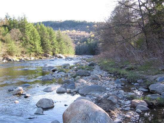 Chesterfield, MA: Downstream of the MA Gorge the Westfield River is trout fishing treasure