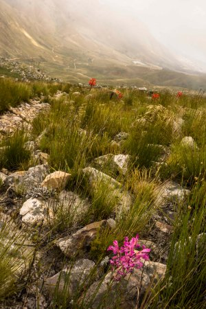 Jonkershoek Nature Reserve: Red Irisis, and not sure what in the foreground..