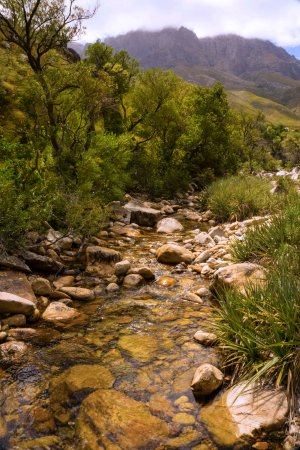 Jonkershoek Nature Reserve: Eerste River close to Witbrug.  Low water during severe drought and low rainfall