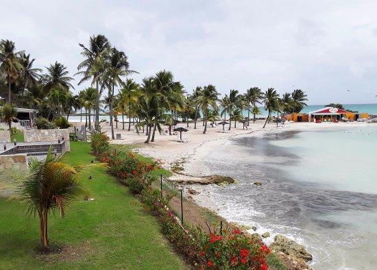 Karibea Beach Resort Gosier: The seaweed