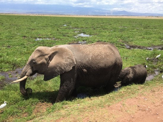 Amboseli National Park, เคนยา: photo0.jpg