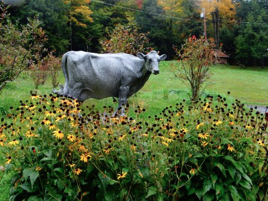 Montpellier, VT: Granite Cow
