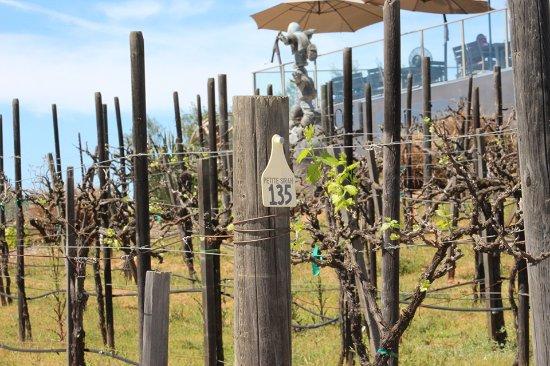 Ramona, CA: Vineyards