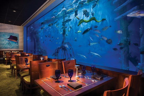Swim With The Fishes In Our 33 500 Gallon Aquarium Tank