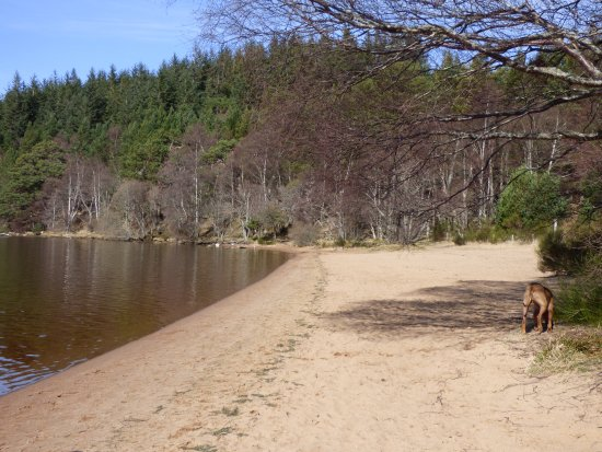 Aviemore, UK: An empty beach out of season on Loch Morlich