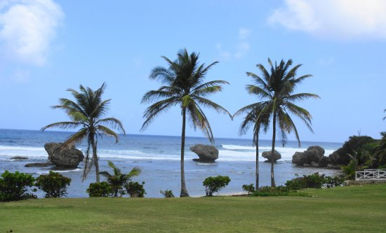 Suntours Day Tours: bathsheba again