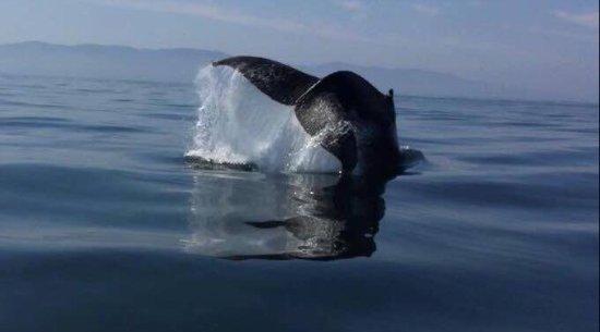 Ocean Friendly Whale Watching Tours: photo0.jpg