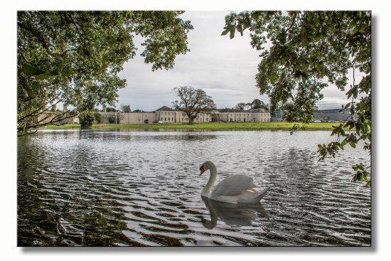 Castlemartyr, Irland: Swan Lake