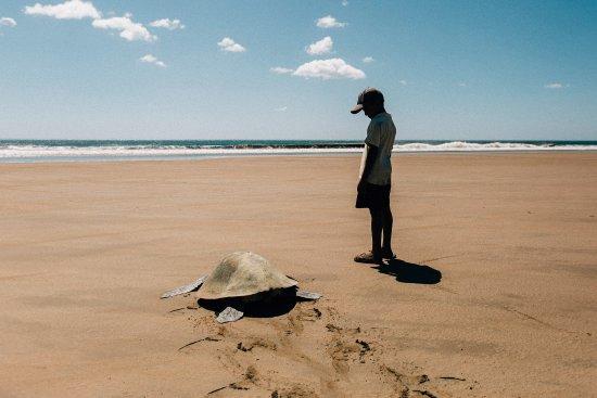Γρανάδα, Νικαράγουα: Turtle Power!