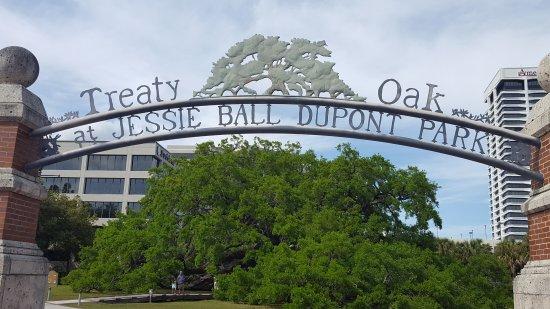 Jesse Ball Dupont Park