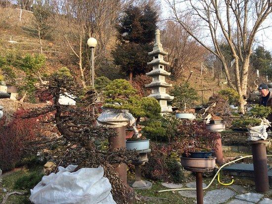 Giardino Museo Bonsai della Serenità