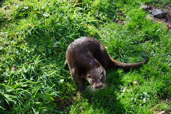 Buckfastleigh, UK: Otter keeper for a morning experience