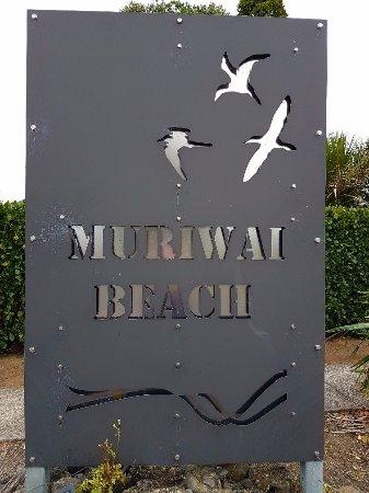 Head to Muriwai Beach for the Gannet colony