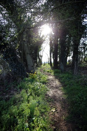Chipping Norton, UK: Path to the stones