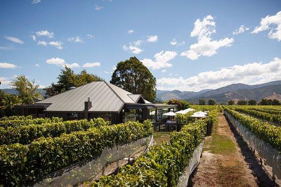 Saint Clair Vineyard Kitchen: Dining in the vines
